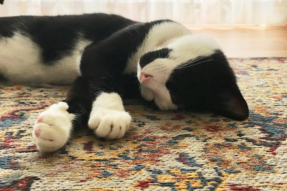 猫ちゃんとベルギーラグ